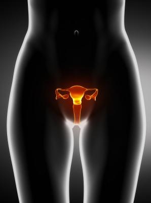 Ženské pohlavní ústrojí/ilustrační foto