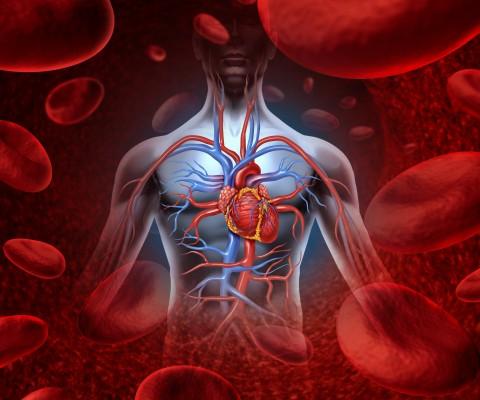 Lidské srdce/ilustrační foto