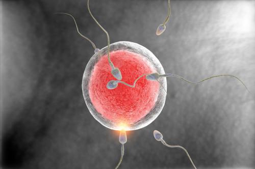 Oplodnění vajíčka/ilustrační foto