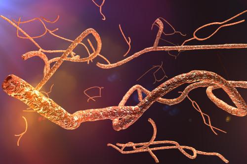 Virus eboly/ilustrační foto