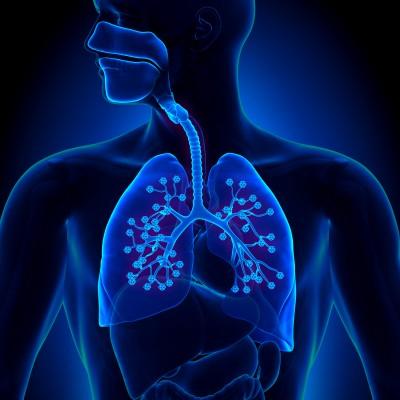 Dýchací cesty/ilustrační foto