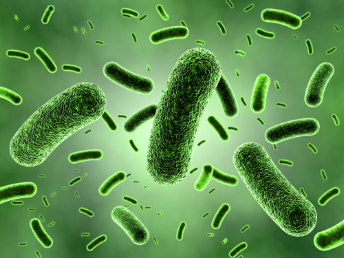 Bakterie/ilustrační foto