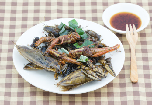 Hmyz na talíři/ilustrační foto