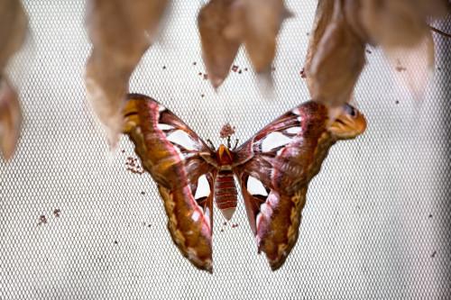 Motýl/ilustrační foto