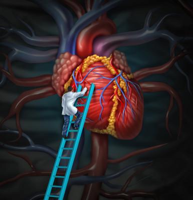 Srdce/ilustrační foto