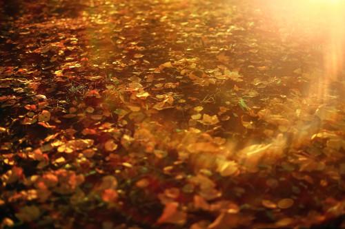 Podzim/ilustrační foto